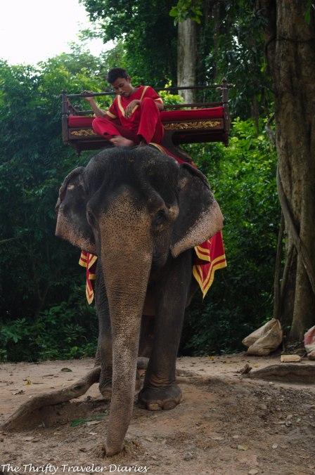 Elephant ride in Angkor Wat