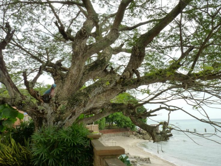 beach, Dumaguete